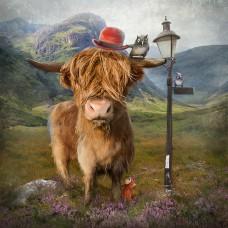 Print - Highland Cow by Matylda Konecka