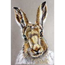 Print - Scottish Hare by Jenny Stewart