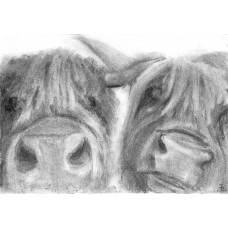 Print - Two Coos by Sam Coull